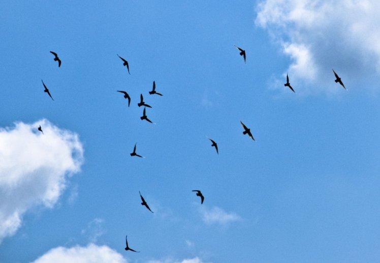 sky_birds_by_quinnphotostock-d36mp1i