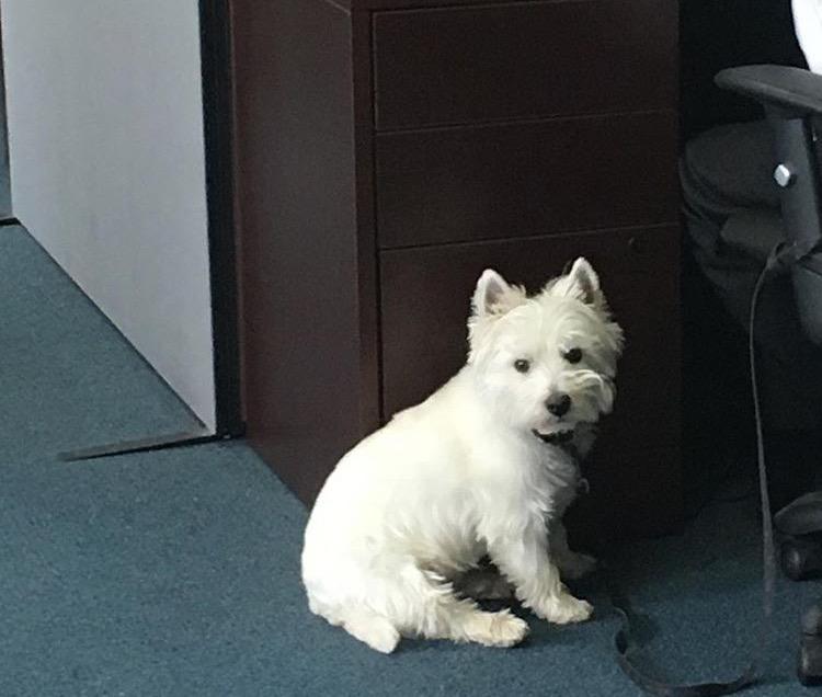 Cute dog sitting near owner
