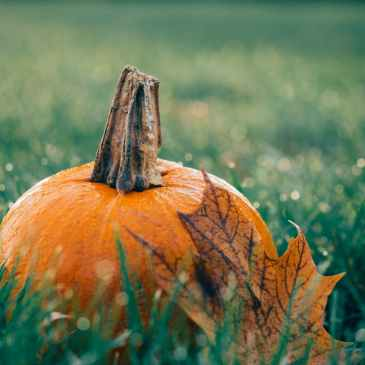 pumpkin and fall leave in the grass, seasonal